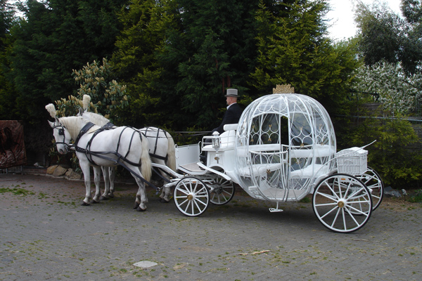 Cinderella Glass Pumpkin Carriage Hire London Our White Wedding Horses